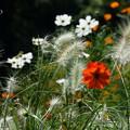 写真: 里山ガーデン。。-276