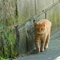 写真: 猫たち。。-004