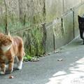 写真: 猫たち。。-006