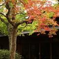 写真: 箱根美術館庭園-189