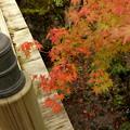 写真: 箱根美術館庭園-178