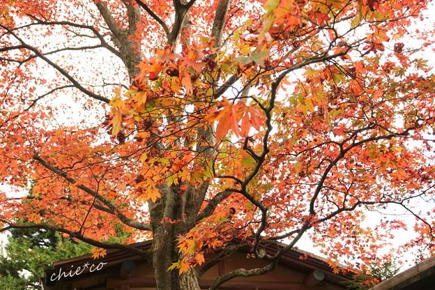 箱根美術館庭園-210