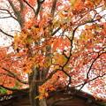 写真: 箱根美術館庭園-210