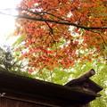 写真: 箱根美術館庭園-211