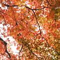 写真: 箱根美術館庭園-213