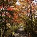 写真: 箱根湿生花園-235