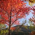 写真: 箱根湿生花園-242