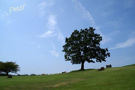 空と・・樹と・・♪