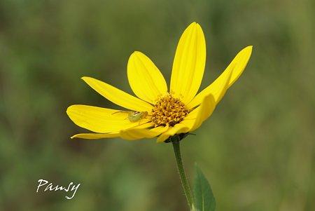 Yellow・・