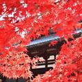 Photos: 紅葉真っ盛り