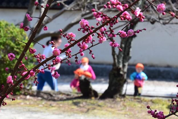 梅の花の下で