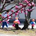 Photos: 梅の花の下で