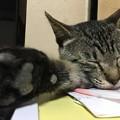 写真: 猫パンチ