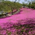 芝桜の庭園