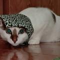 写真: 泥棒猫?