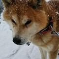 雪の日の散歩にて