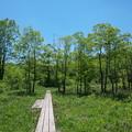 写真: 初夏の湿原
