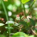 Photos: 初夏の彩