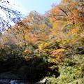 写真: 渓谷の紅葉(1)