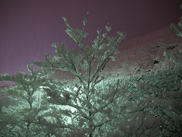 夜に雪の華咲く