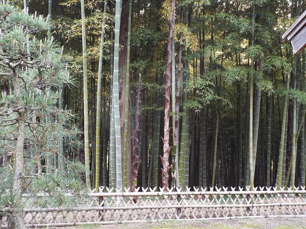 1705110109竹林筍