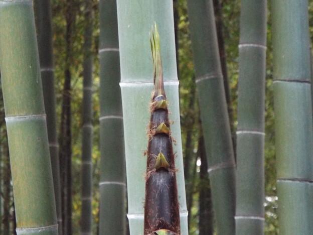 1705110112竹林筍