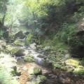 写真: 新緑の森
