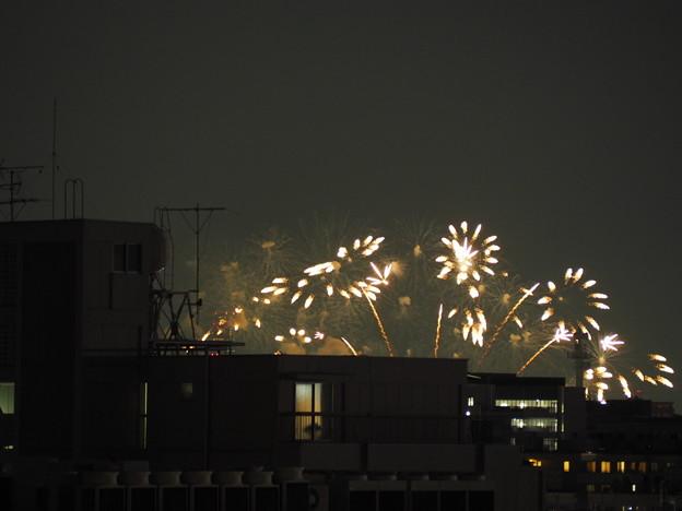 写真: ガーベラのような花火