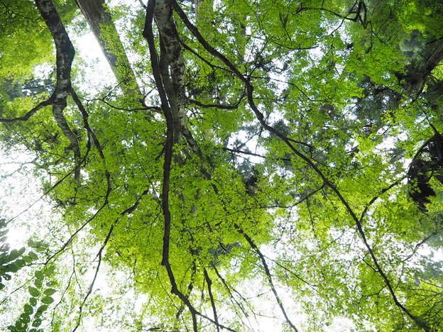 清らかな森