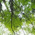 写真: 清らかな森