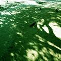 木にとまる鳩