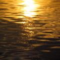 写真: 金色の海