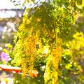 Photos: 夏の日差し~