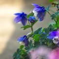 庭の片隅で~(^^♪