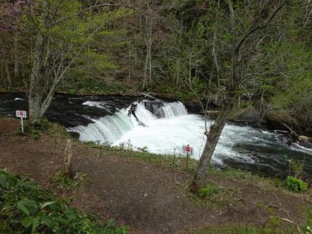 170514-07さくらの滝