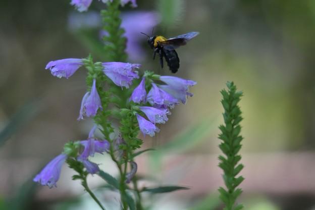 蜜もとめ花から花へ今日も飛ぶ