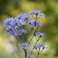 自然なる花束