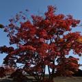 11月上旬昭和記念公園1