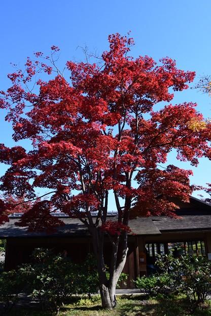 11月上旬昭和記念公園2