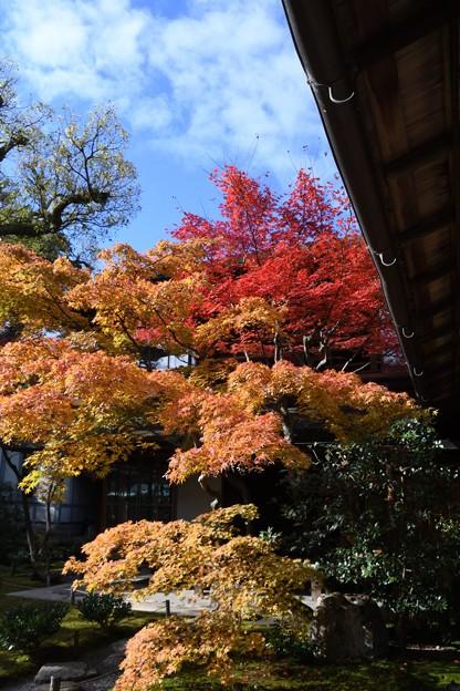 青空に木々の色づきが見事