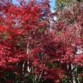 参道の紅葉の赤さ