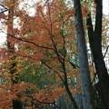 竹林と黄葉と