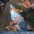 紅葉谷 川に張り出す 残り葉よ