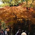 写真: 下鴨神社を背にして南の糺の森方面へ