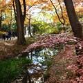 写真: 河合神社を出て出町柳駅へ