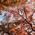 Photos: 都立殿ヶ谷戸庭園紅葉