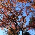 Photos: 空青し紅葉見上げ時止まる