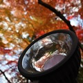 昼なればライトに紅葉映し見る