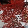 紅葉をまとった鐘楼1