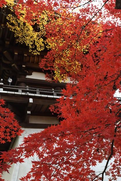 紅葉をまとった鐘楼2